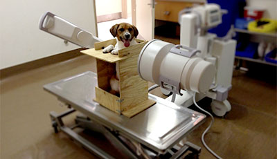 Dog getting a chest radiograph
